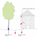 The picture shows a hand drawn picture of ground subsidence occuring from a tree absorbing all the moisture